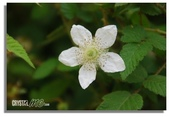 華陶窯的自在之美:萬綠叢中一朵白