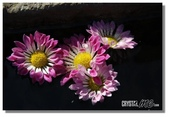 華陶窯的自在之美:陶缸裡的落花