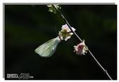 華陶窯的自在之美:蝶戀花
