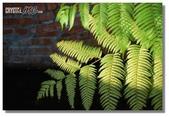 華陶窯的自在之美:綠光