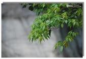 早安!花蓮~遊山:白楊步道
