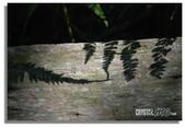 華陶窯的自在之美:葉影