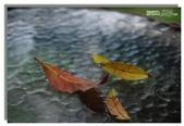 紫色午後:落葉