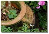 紫色午後:一直就喜歡這樣的陶甕與植物的組合