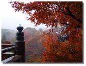 京都秋楓:029.jpg