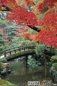 京都秋楓:093017.jpg