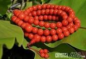 艾文拍的美美水晶:20100325之紅珊瑚念珠