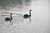 秋遊後慈湖:雙宿雙飛