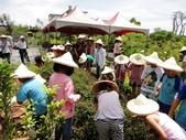 國華安親班快樂的戶外教學活動於7/17在大安藥園休閒農場圓滿結束:DSC06596.JPG