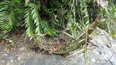 2014年6月15日宜蘭縣藥用植物學會與大安藥園休閒農場到宜蘭大學實驗林場進行戶外參觀教學活動:DSC05158.JPG