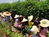 上晉安親班小朋友最盼望的戶外教學終於8/8在大安藥園休閒農場快樂結束:DSC07144.JPG