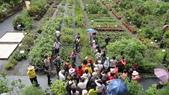 2014年6月8日板橋中醫社大170人到大安藥園休閒農場進行參訪活動:DSC04808.JPG