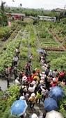 2014年6月8日板橋中醫社大170人到大安藥園休閒農場進行參訪活動:DSC04809.JPG