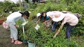 2014年6月8日板橋中醫社大170人到大安藥園休閒農場進行參訪活動:DSC04818.JPG