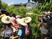 上晉安親班小朋友最盼望的戶外教學終於8/8在大安藥園休閒農場快樂結束:DSC07150.JPG