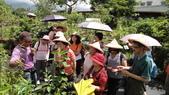 2014年6月8日板橋中醫社大170人到大安藥園休閒農場進行參訪活動:DSC04829.JPG