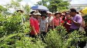 2014年6月8日板橋中醫社大170人到大安藥園休閒農場進行參訪活動:DSC04833.JPG