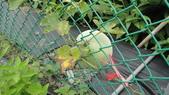 2014年6月13日宜蘭縣蘭陽技術學院化妝品應用系到大安藥園休閒農場進行參訪活動:DSC05063.JPG