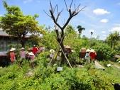 大安藥園休閒農場的研究夥伴:新教育文理補習班於2012.07.27蒞臨研究學習中草藥:DSC06755.JPG