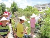 大安藥園休閒農場的研究夥伴:新教育文理補習班於2012.07.27蒞臨研究學習中草藥:DSC06757.JPG