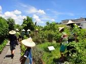 大安藥園休閒農場的研究夥伴:新教育文理補習班於2012.07.27蒞臨研究學習中草藥:DSC06760.JPG