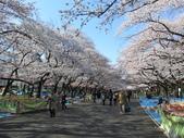 2012東京賞櫻記【Day4 上野。淺草。六義。千鳥】:【上野公園】