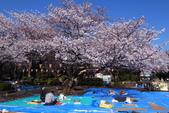 2012東京賞櫻記【Day4 上野。淺草。六義。千鳥】:上野公園】