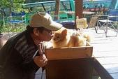 981206南庄之旅:球哥與小狗