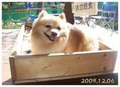 981206南庄之旅:可愛小狗