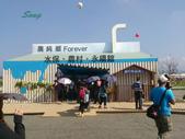 14-11-10新社花海:DSC_3855.jpg