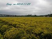 14-11-09&13銅鑼賞杭菊:DSC_3766.jpg