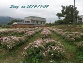 14-11-09&13銅鑼賞杭菊:DSC_3769.jpg