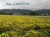 14-11-09&13銅鑼賞杭菊:DSC_3755.jpg