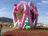 15-11-09新社花海:DSC_6622.jpg