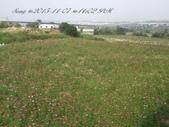 15-11-07銅鑼杭菊:DSC_6541.jpg