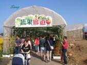 14-11-10新社花海:DSC_3888.jpg