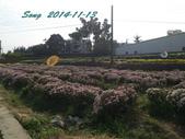 14-11-09&13銅鑼賞杭菊:DSC_3936.jpg