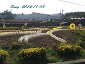 14-11-09&13銅鑼賞杭菊:DSC_3932.jpg