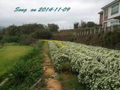 14-11-09&13銅鑼賞杭菊:DSC_3785.jpg