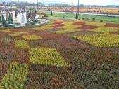 15-11-09新社花海:DSC_6609.jpg