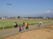 14-11-10新社花海:DSC_3897.jpg