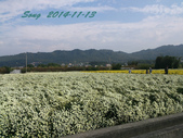 14-11-09&13銅鑼賞杭菊:DSC_3921.jpg