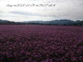 15-11-09新社花海:DSC_6598.jpg