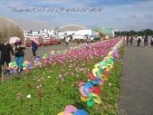 15-11-09新社花海:DSC_6683.jpg