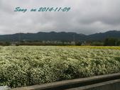 14-11-09&13銅鑼賞杭菊:DSC_3751.jpg