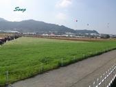 14-11-10新社花海:DSC_3828.jpg