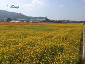 14-11-10新社花海:DSC_3835.jpg