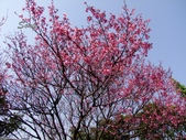 13-03-08臺北內湖碧山巖、白石湖&吊橋、鶯歌老街:忠勇山
