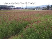 15-11-09新社花海:DSC_6669.jpg
