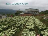 14-11-09&13銅鑼賞杭菊:DSC_3770.jpg